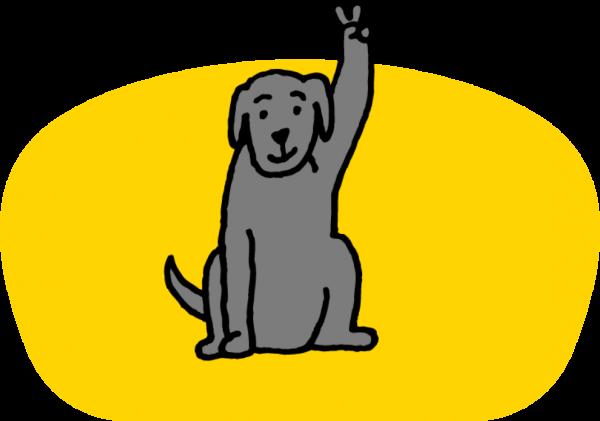 Jak získat psa?