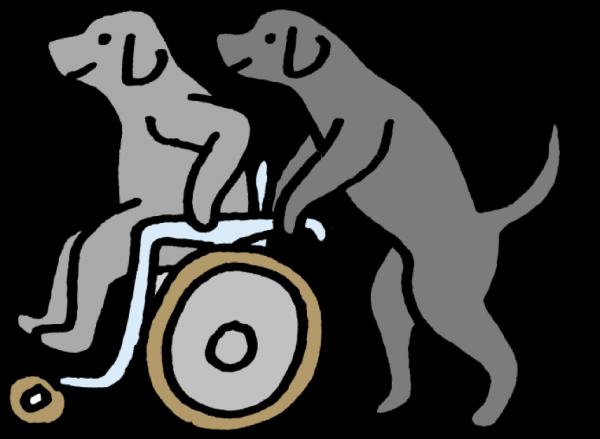 Asistenční psi pro zdravotně postižené